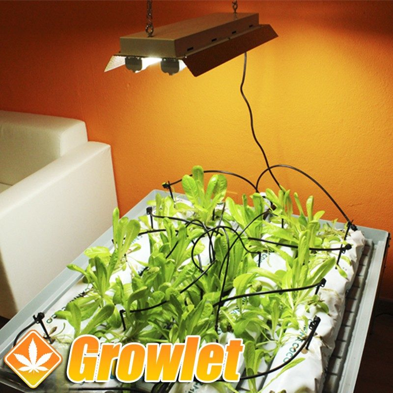 Kit fluorescentes PL 2 x 55 W para crecimiento