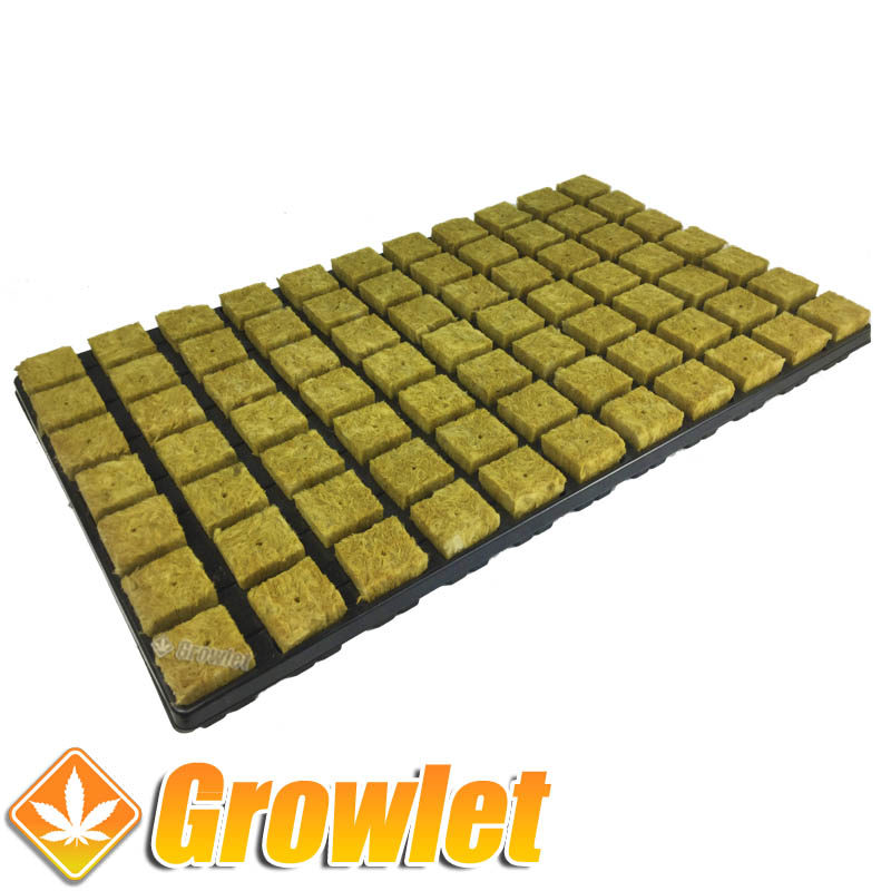 Badeja de cubos de lana de roca para germinar semillas o hacer esquejes
