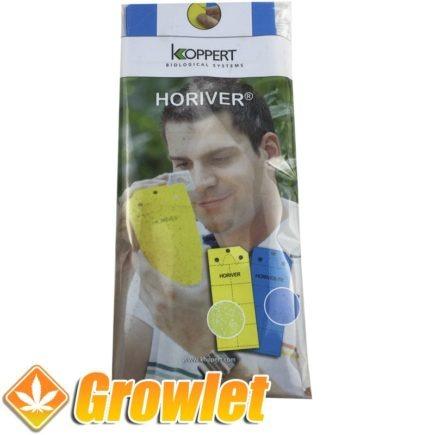 Paquete de trampas adhesivas azules Horiver de Koppert
