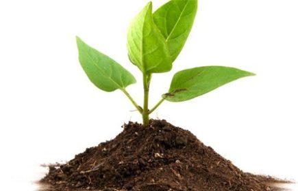 Abonos de crecimiento para coco