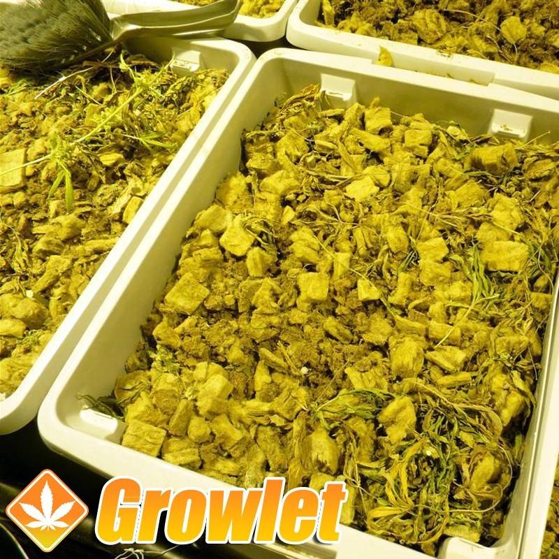 Mapito Speedgrow: Sustrato de cultivo hidropónico