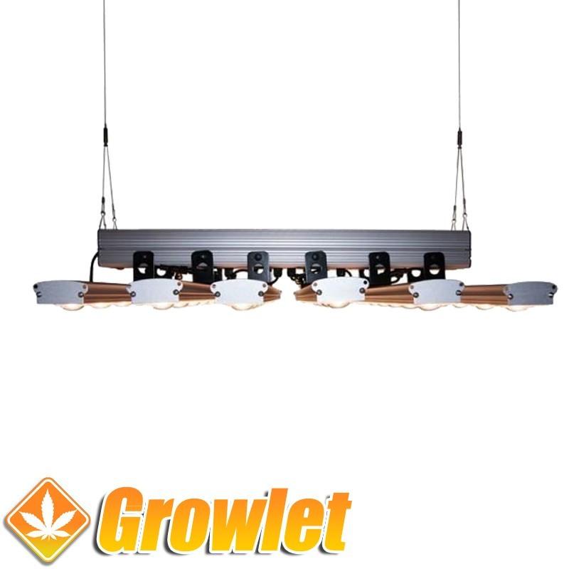 IndoorLed Tarantula 750 (360 W) LED de cultivo interior