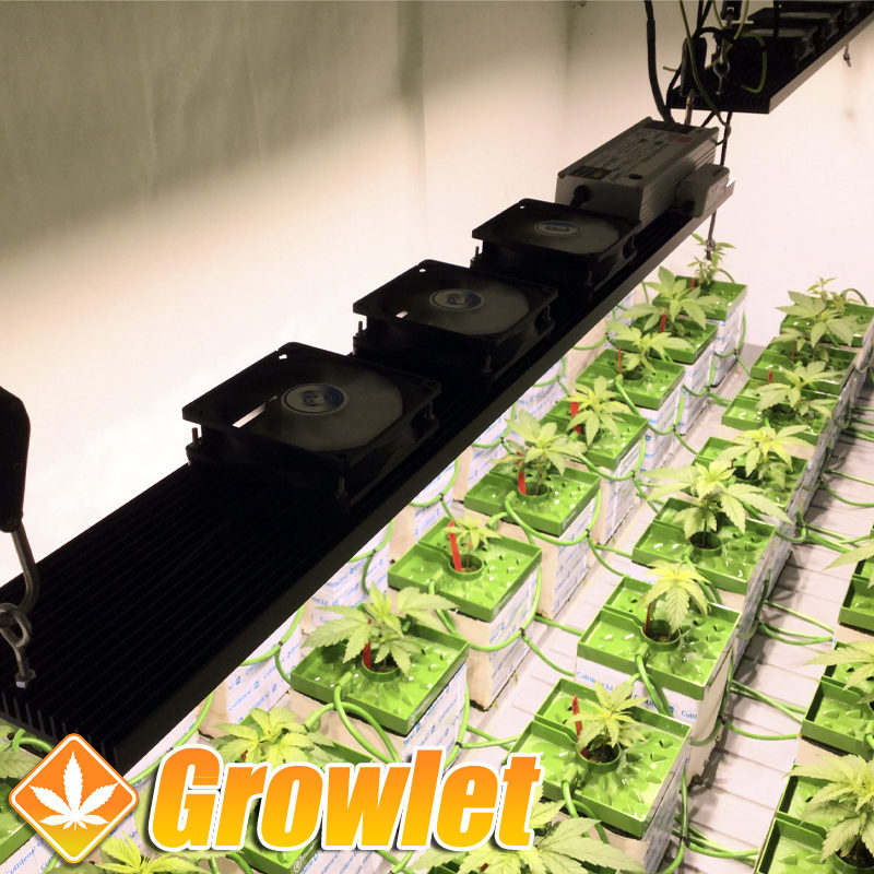 LED de cultivo TGL220 de Todogrowled