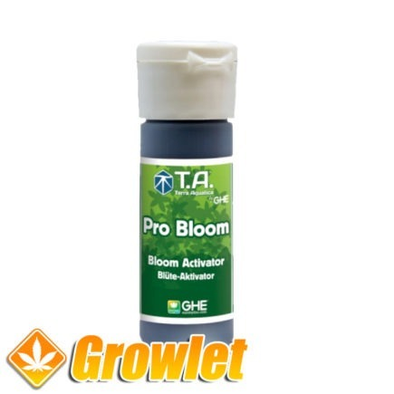Pro Bloom de GHE