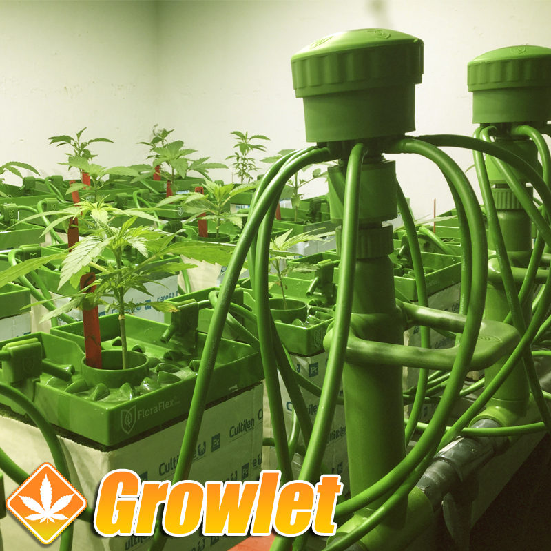Floraflex Quick Disconnect es cultivo interior de cannabis