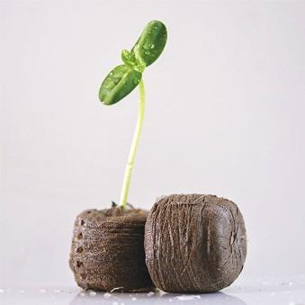Herramientas para las semillas
