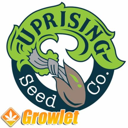The Gordon semillas de Uprising Seed Co