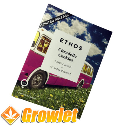 Feminized seeds Citradelic Cookies by Ethos Genetics