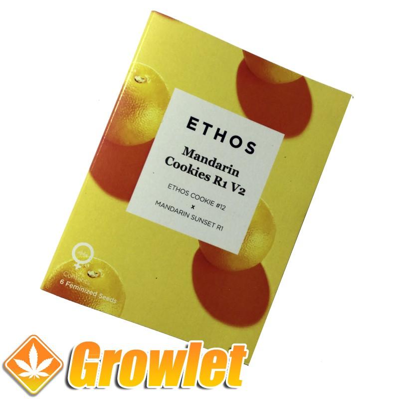 Semillas feminizadas Mandarin Cookies R1 V2 de Ethos Genetics