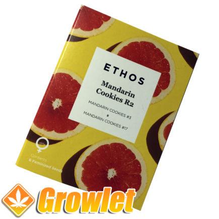 Feminized seeds Mandarin Cookies R2 by Ethos Genetics