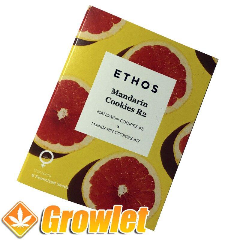Semillas feminizadas Mandarin Cookies R2 de Ethos Genetics
