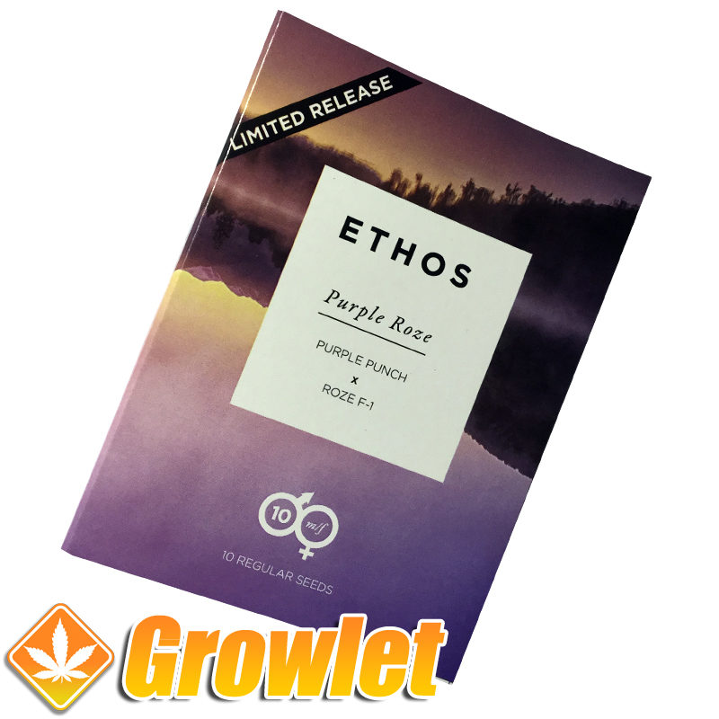 Regular seeds Purple Roze by Ethos Genetics