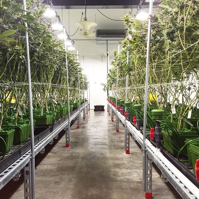 PotPro de Floraflex en cultivo de interior