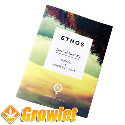 Feminized seeds Dosi-Whoa R1 by Ethos Genetics