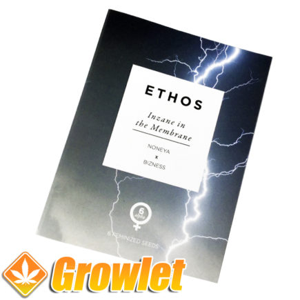 Feminized seeds Inzane in the Membrane by Ethos Genetics