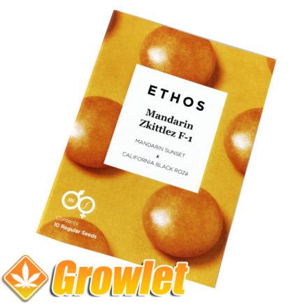 Semillas regulares Mandarin Zkittlez de Ethos Genetics