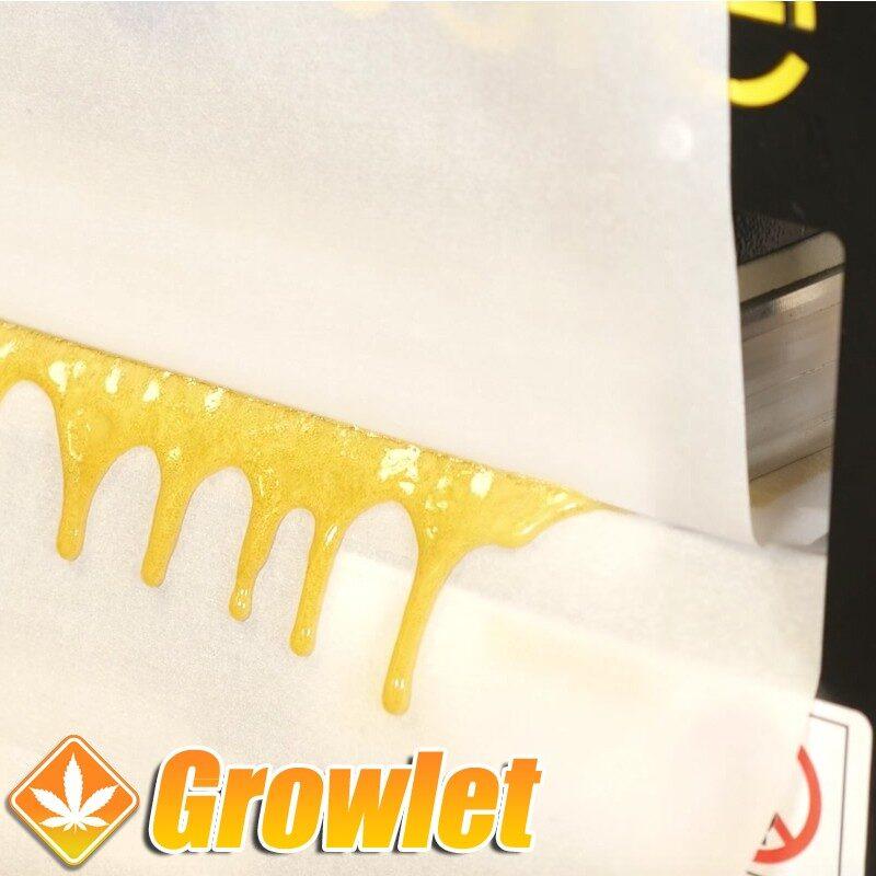 Oil Slick Paper para extracciones de Rosin o BHO