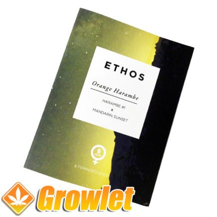 Semillas feminizadas Orange Harambe de Ethos Genetics
