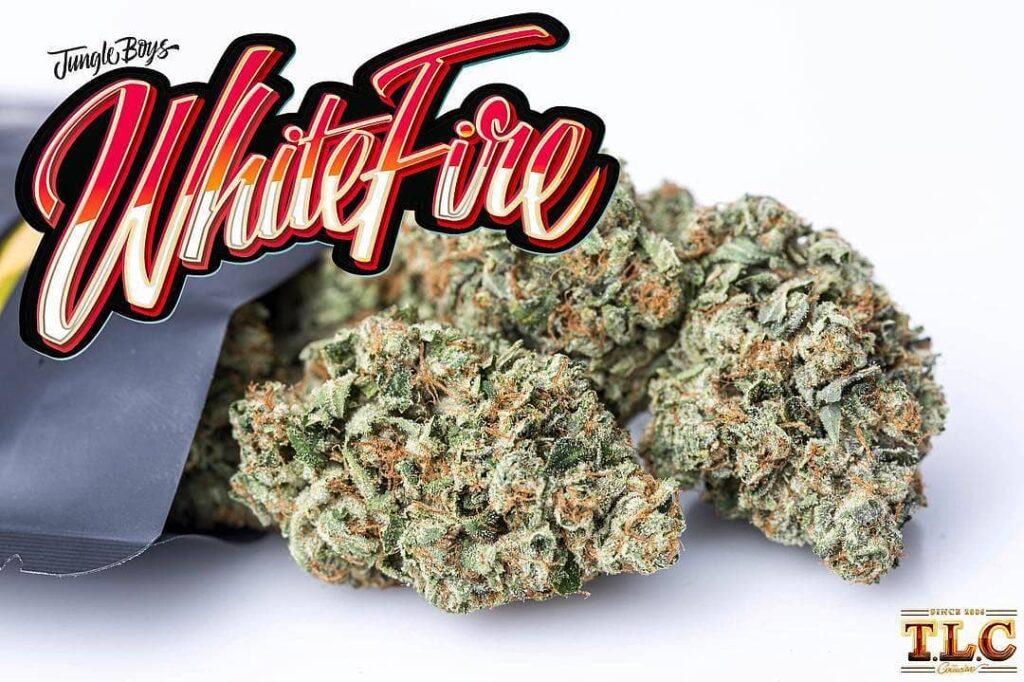 Cogollo de marihuana de White Fire OG de Jungle Boys