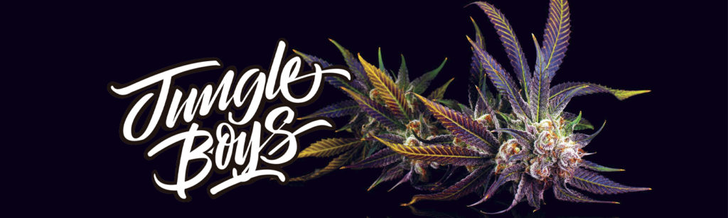 Jungle Boys Collective logo