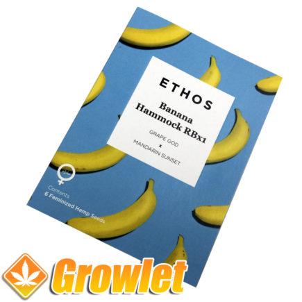 Semillas de marihuana Banana Hammock R1 de Ethos