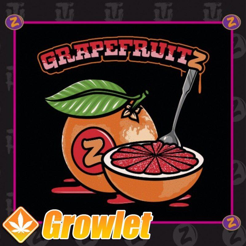 Semilas de marihuana Grapefruitz de Plantinum Seeds - Terp Hogz