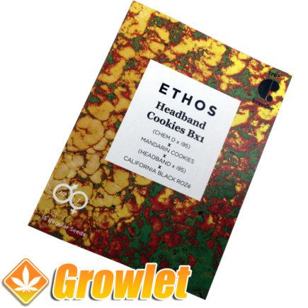 Graines de cannabis Headband Cookies BX1 d'Ethos
