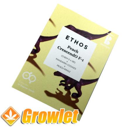 Graines de cannabis Peach Crescendo F1 d'Ethos