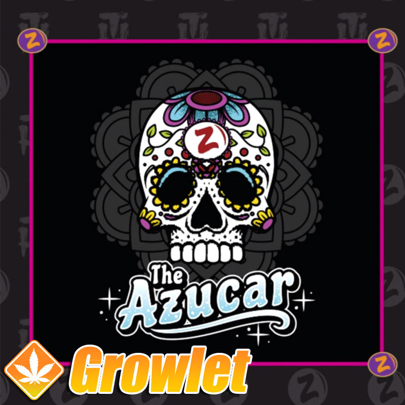 Semillas de marihuana The Azucar de Platinum Seeds -Terp Hogz