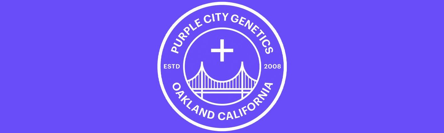Semillas feminizadas de Purple City Genetics