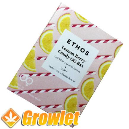 Semillas Lemon Berry Candy Og de Ethos Genetics