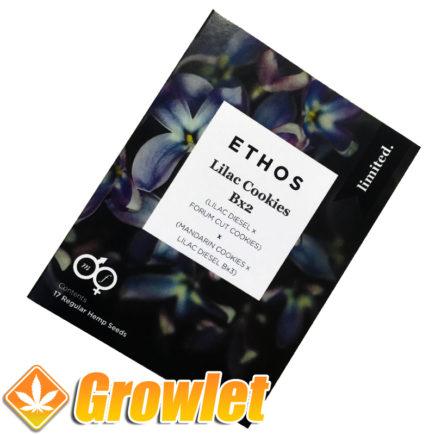 Semillas Lilac Cookies de Ethos Genetics
