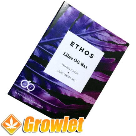 Semillas Lilac OG Bx1 de Ethos Genetics