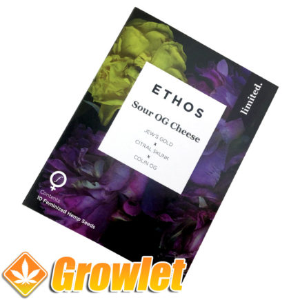 Sour OG Cheese de Ethos Genetics