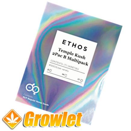 Temple Kush 2Pac B Multipack de Ethos Genetics