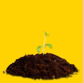 Cultivo en tierra