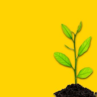 Abonos de crecimiento para tierra