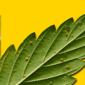 Insecticidas (Problemas con insectos)