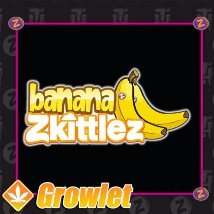 Semillas de marihuana Banana Zkittlez de Platinum Seeds - Terp hoz