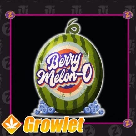 Semillas de Berry Melon-O de Platinum Seeds - Terp hoz