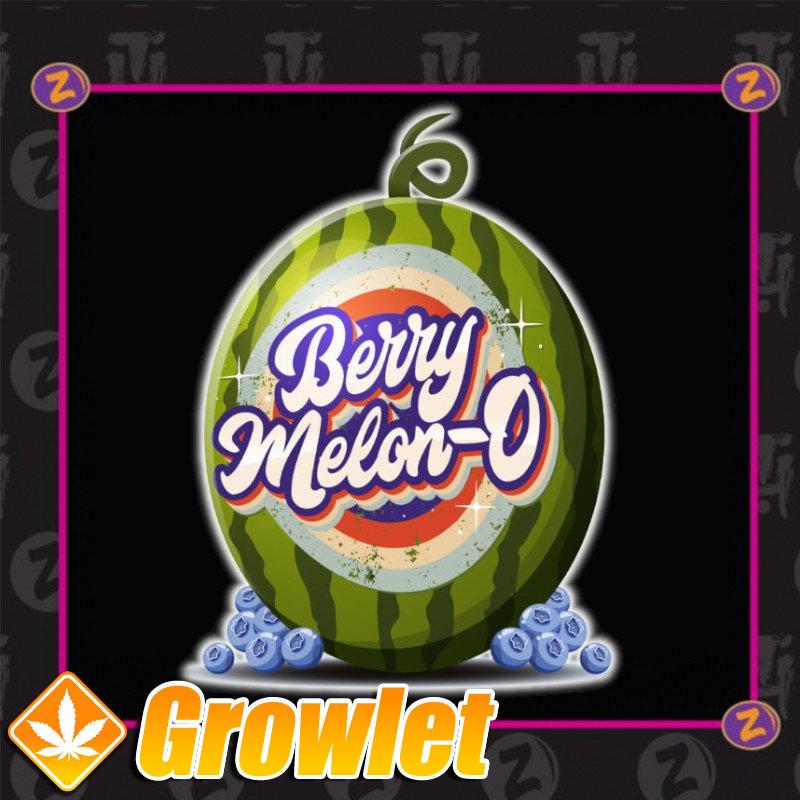 Berry Melon-O de Plantinum Seeds