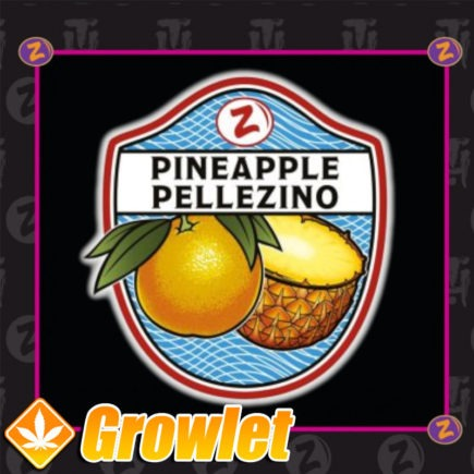 Semillas de marihuana Pineapple Pellezino de Platinum Seeds - Terp hoz