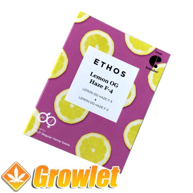 Lemon OG Haze F-4 semillas regulares de cannabis