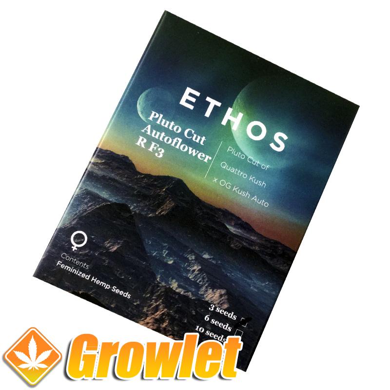 Pluto Cut R F3 semillas feminizadas autoflorecientes de cannabis