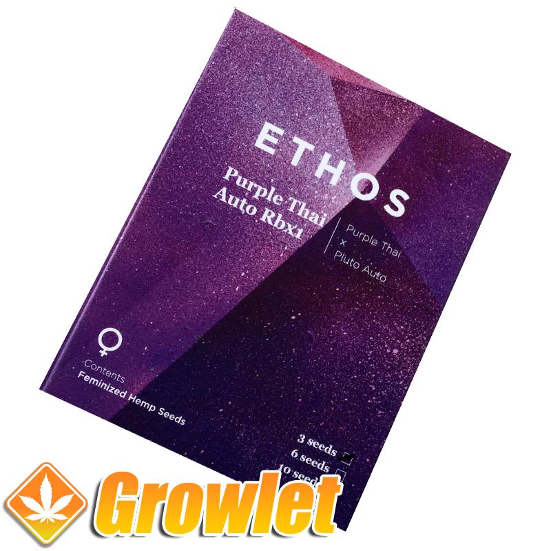 Purple Thai R B1 semillas feminizadas autoflorecientes de cannabis