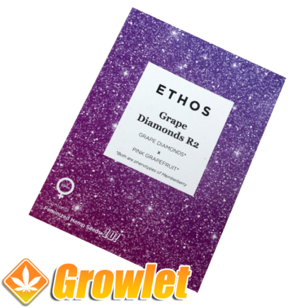Grape Diamonds de Ethos Genetics