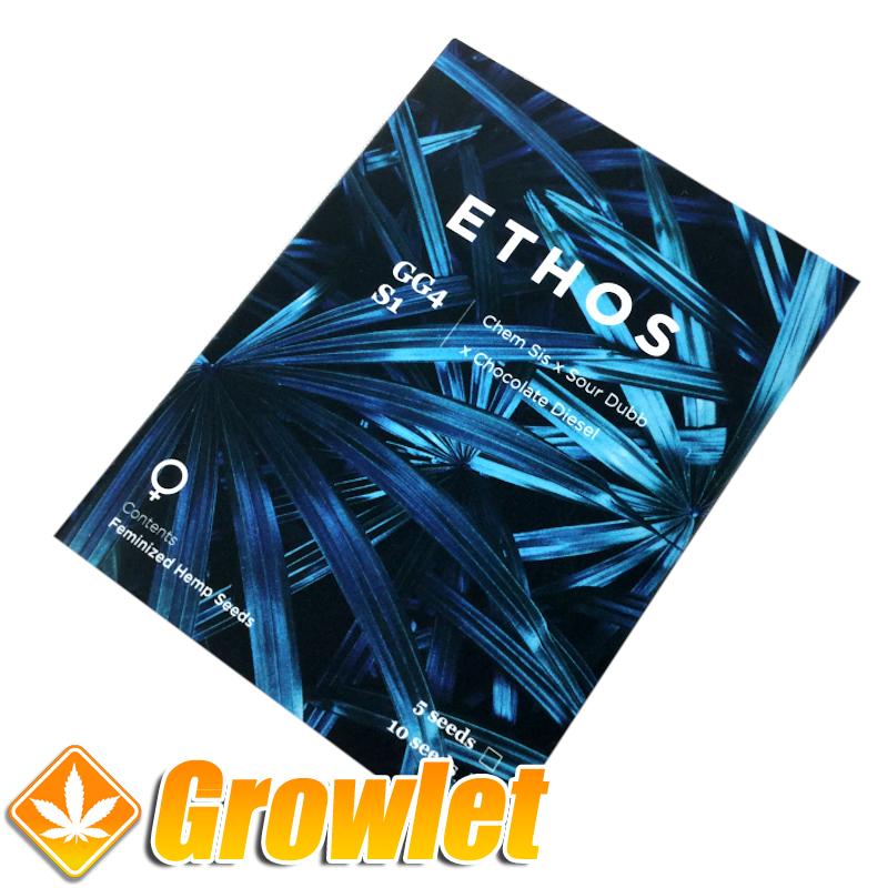GG4 de Ethos Genetics