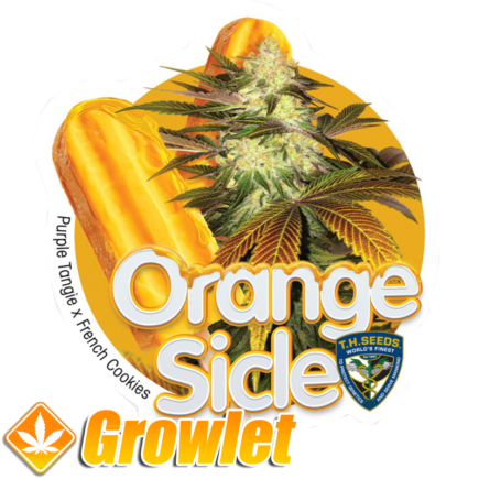 Orangesicle de TH Seeds