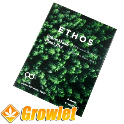 Ethos Hash Plant de Ethos Genetics