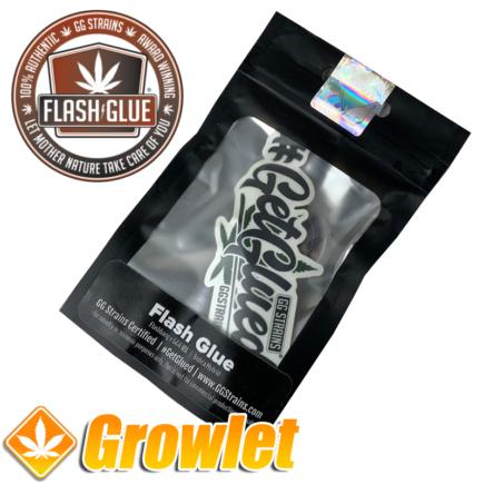 Flash Glue de GG Strains